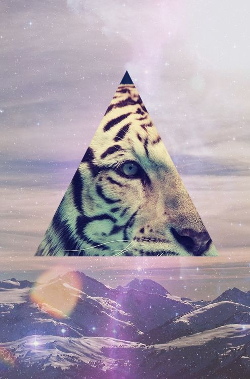 Tiger tumblr hipster wallpaper - photo#23