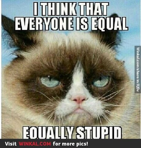 Grumpy Cat Quotes. QuotesGram