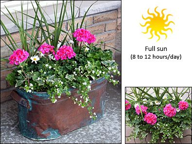 Full sun rectangular container garden plant combinations pinter - Best flower combinations for containers ...