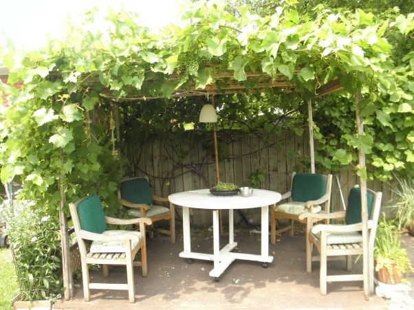 Backyard Vineyard Ideas :  Cozy Backyard Retreat The Grape Arbor  Yard Designs  Decorating