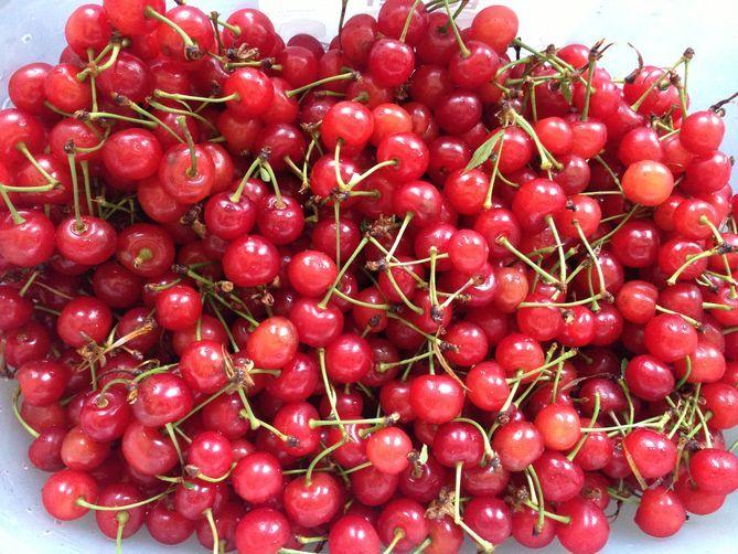 Sour Cherry Granita | Recipe