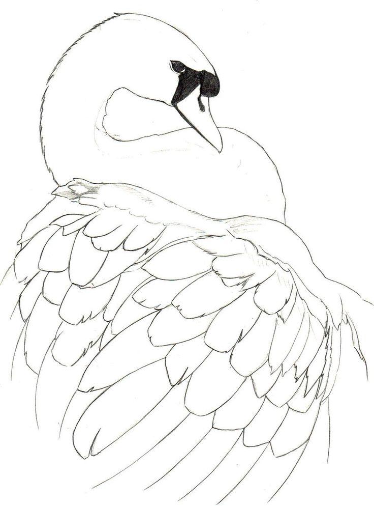Line Art Vs Sketch : Swan sketch by nemalo line drawings pinterest