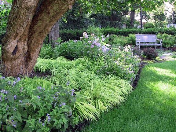 Plantings under a tree gardening pinterest for Garden under trees