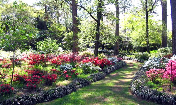 Alfred B Maclay Gardens State Park Tallahassee Pinterest