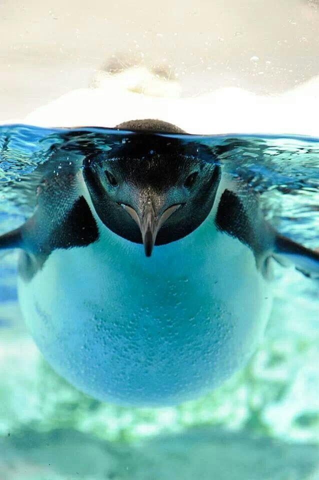 Pingvini 9ae96de29f68d56c8329ffe907554df1