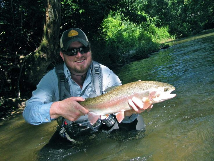 Trout fishing in north georgia rainbow trout pinterest for Trout fishing in georgia