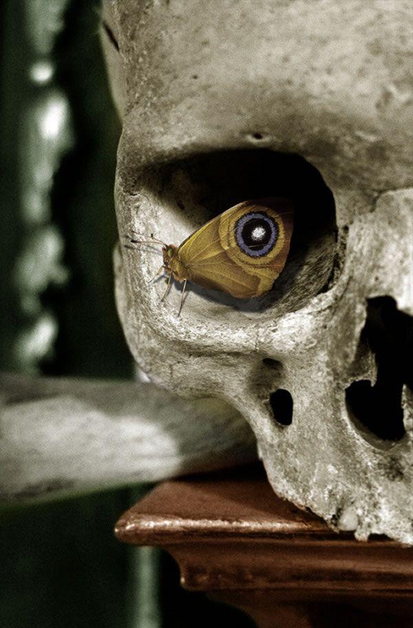 butterfly in eye socket of human skull
