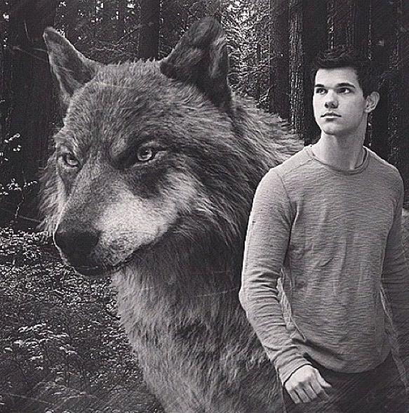 twilight jacob black wolf - photo #4