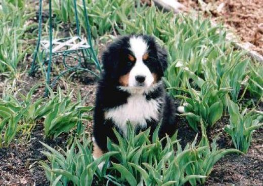 Dog Friendly Backyard Ground Cover : Dog friendly gardening and landscaping tips