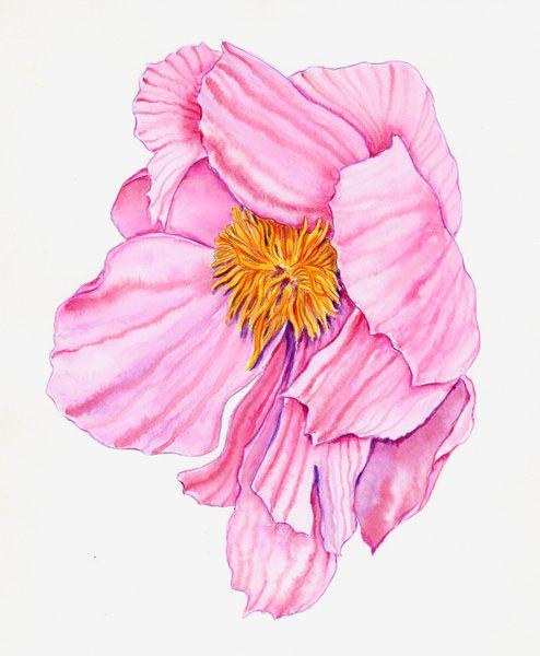 Kristy kutch watercolor pencil tutorial water color for Watercolor drawing tutorial