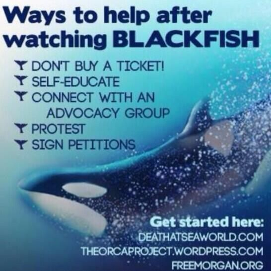 Ramblings Thoughts, Discussion, Current Events, Killer Whales, Animals, Caged, Abused, Captured, Blackfish