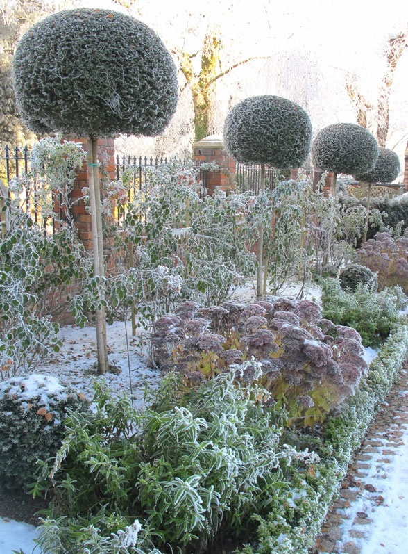 Pinterest winter garden ideas photograph winter garden i for Garden design winter 2018