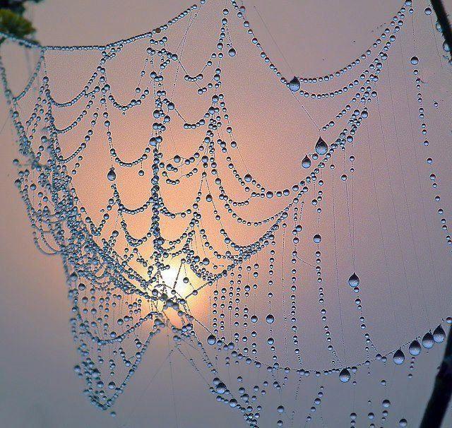 pretty web