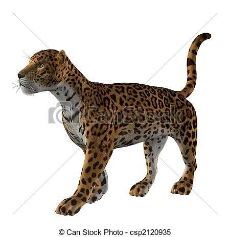 jaguar standing - photo #2