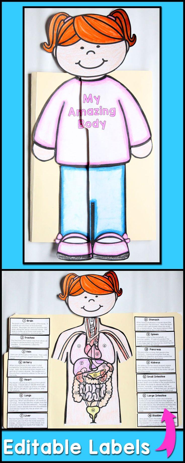 Human Body Systems For Kids Crazywidowfo