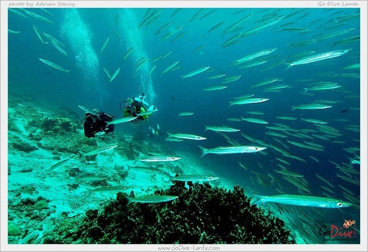 ... Scuba #Phuket #Thailand #Snorkeling #Beaches #GolfPhuket #GolfThailand