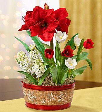 1800flowers christmas hope