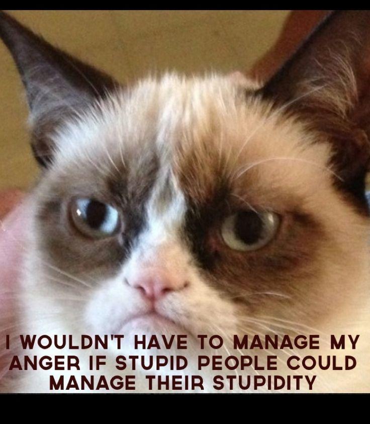 grumpy cat on stupid people funny animal memes pinterest