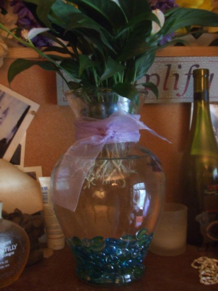 Betta vase ideas related keywords betta vase ideas long for Betta fish vase