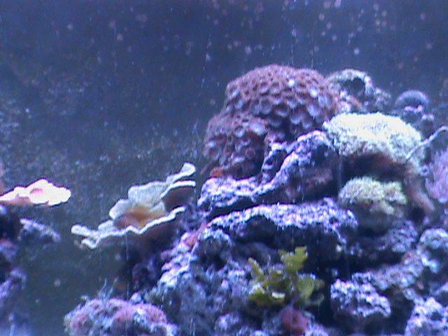Old 75 gallon Reef tanks & Marine inverts Pinterest