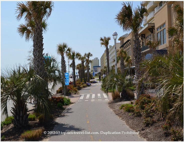 Va Beach Palm Trees