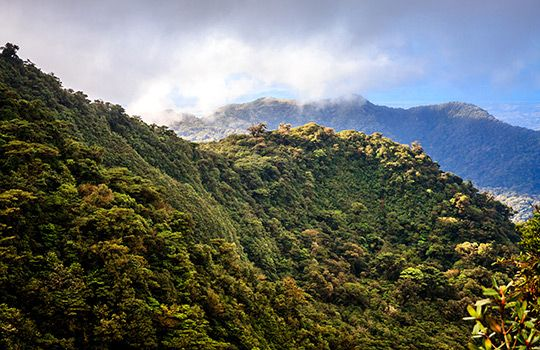 Monteverde rainforest costa rica 169 jean hubert alamy