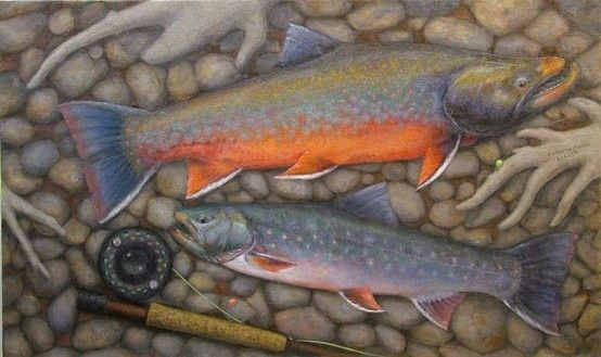 Dolly varden trout pinterest for Dolly varden fish