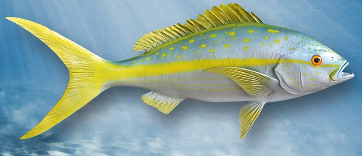 Pin by gray taxidermy on saltwater fishmounts by gray for Florida game fish