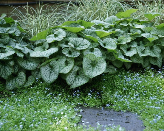 Midwest summer shade garden ideas photograph small midwest for Garden design midwest