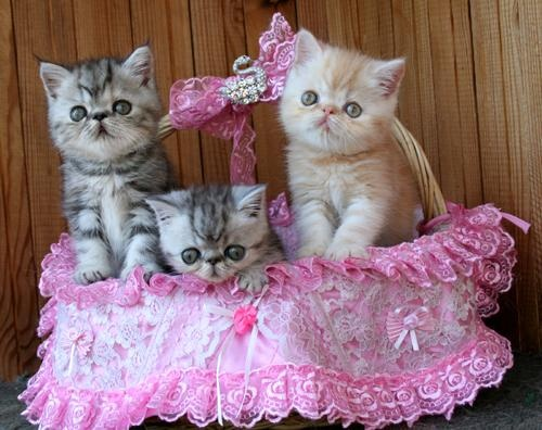 Kittens in a basket | You Can't Take All This Cute | Pinterest
