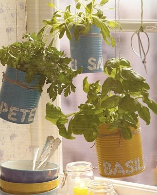 fresh herb in kitchen window in colorful cans