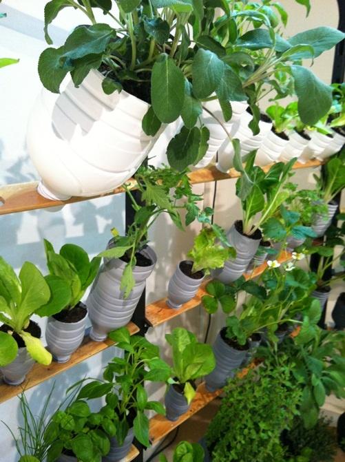 Plastic bottles garden garden pinterest - Plastic bottles for gardening ...