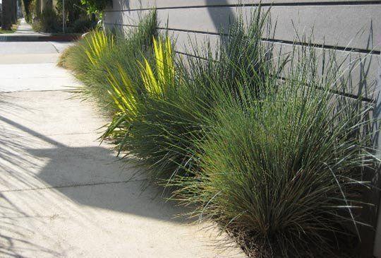 Small space filler ornamental grasses for Ornamental grasses for small spaces