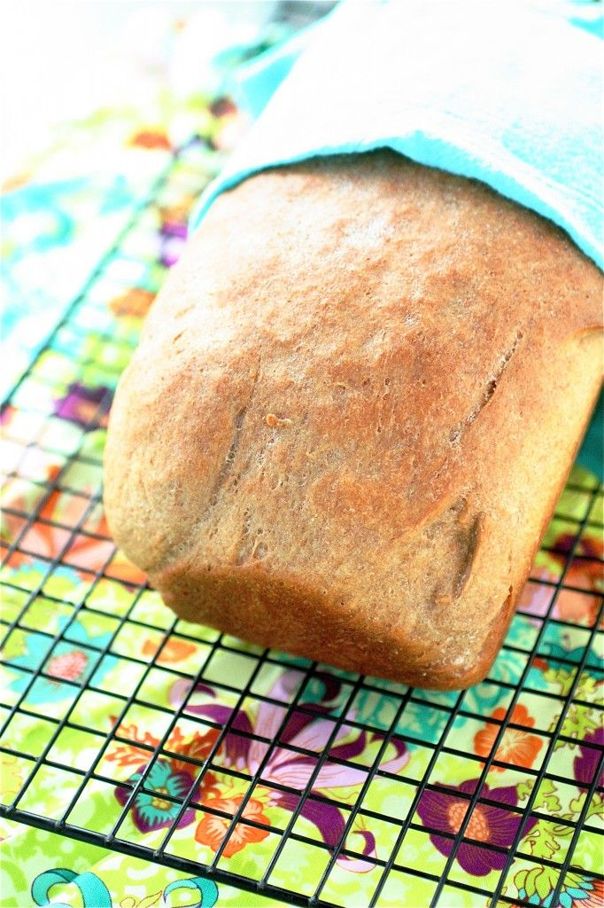 Whole Wheat Bread | The Curvy Carrot Rosebud's Whole Wheat Bread ...