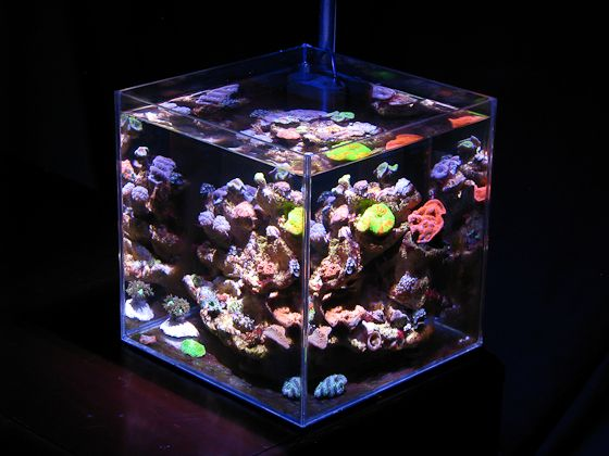 Pinterest discover and save creative ideas for Cube saltwater fish tank