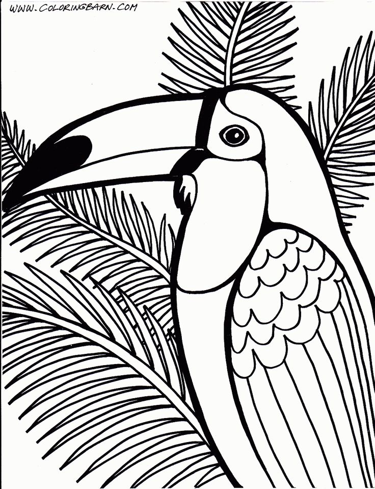 Toucan Coloring Page Parrots And Other Birds Pinterest Toucan Coloring Page