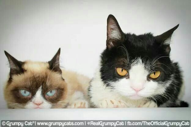 Grumpy Cat And Pokey As Kittens