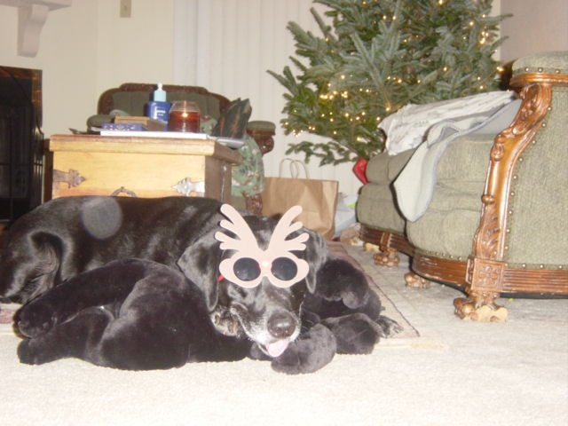 My muse and my best friend in the entire world would be 17 today.  I miss him like I lost him yesterday.