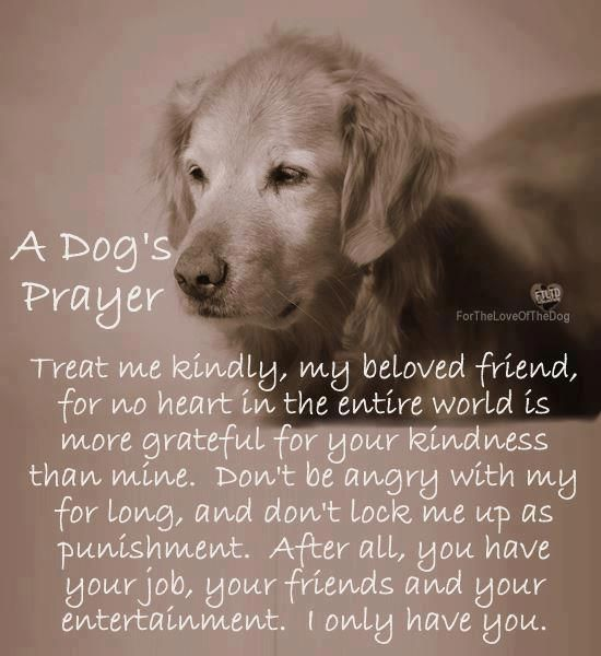 Prayers And Quotes Of Dogs. QuotesGram