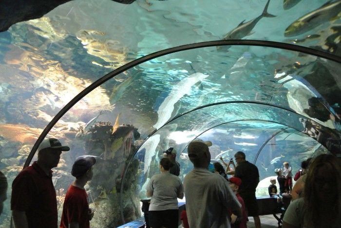 Omaha Aquarium Omaha Pinterest
