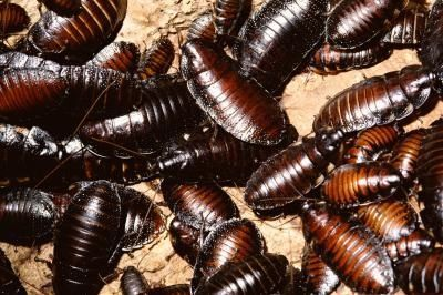 How to Get Rid of Roaches With Household Items