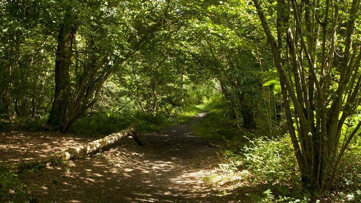 writing a woodland habitat essay