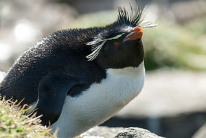 Photo Essay - Antarctic Penguins, Antarctica