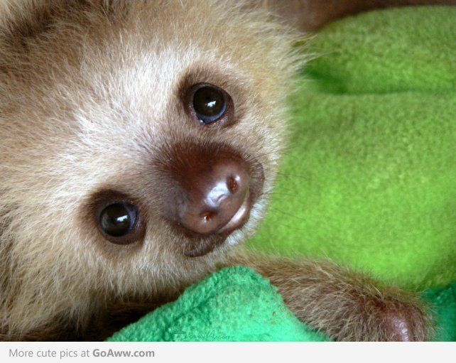 all about sloths