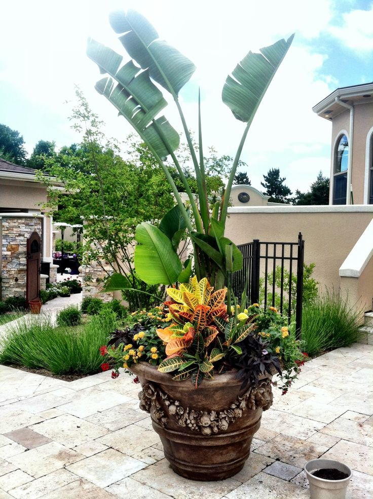 Tropical container container gardening pinterest - Tropical container garden ...