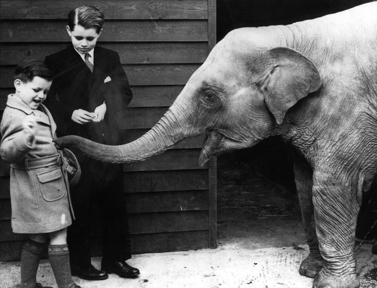 Robert and Edward  Ted  Kennedy as kids  with an elephant Young Ted Kennedy