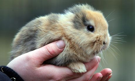 It is an earless bunny. RIP now, sadly.