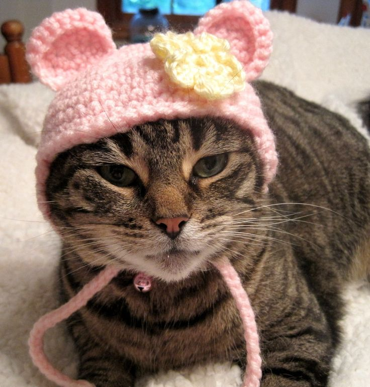 Crochet Cat Hat : Crochet Cat Hat Bear Hat Pet Costume Halloween Photo Prop Pink Yellow