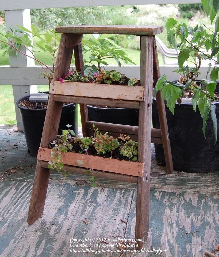 A planted ladder- love :)
