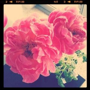 gorgeous pink peonies- my favorite